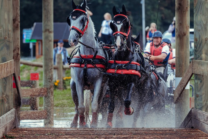 FEI World Driving Championship Four-in-Hand